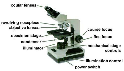 Virtual Lab The Microscope